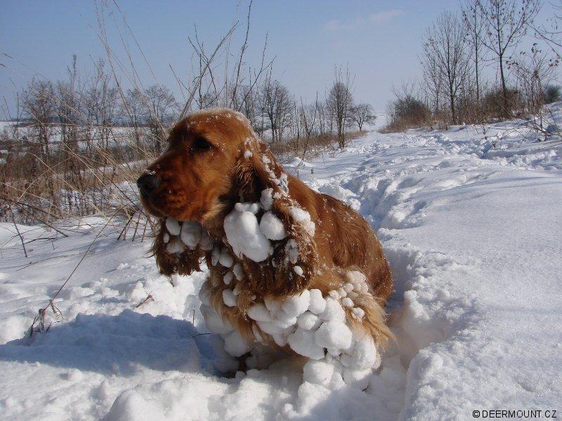 Když lepí sníh..