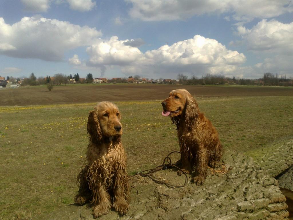 Cedra (vlevo) a Berris