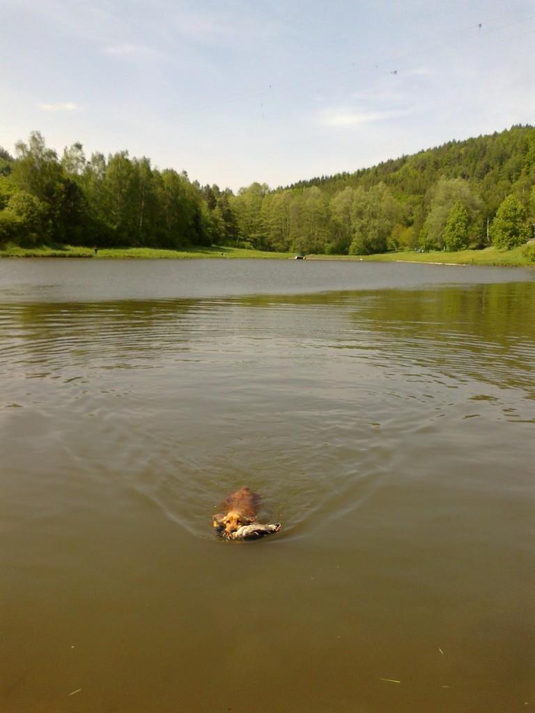 Přinášení kachny z hluboké vody