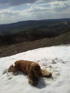 Berris ve sněhu
