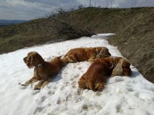 Závěrečná koupačka ve zbývajícím sněhu na Větrníkách