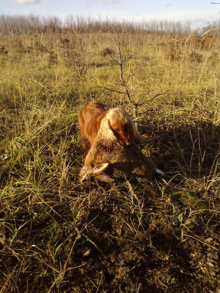 Ambra a její trošku těžší zajíc ;-)