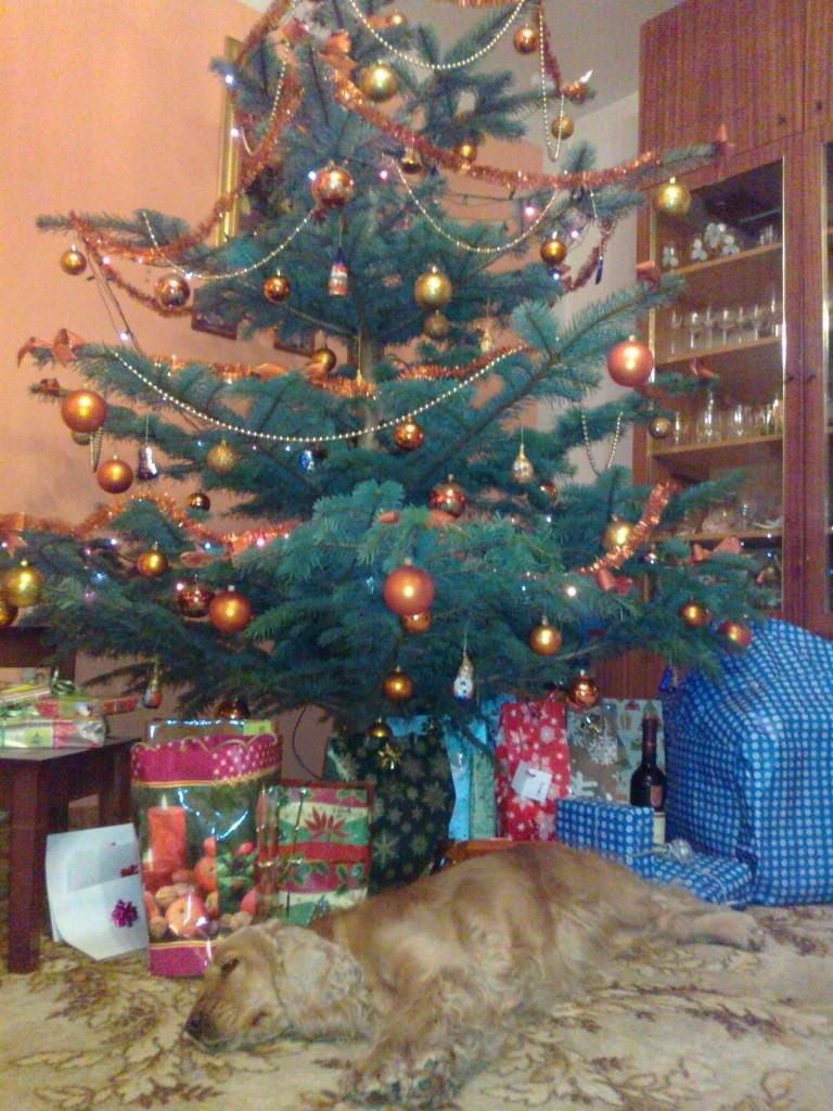 Kira pod stromečkem