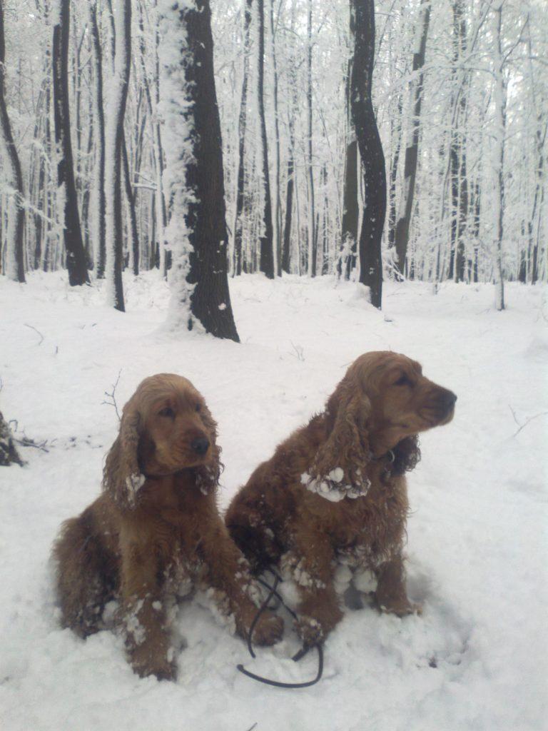 Konečně zase sníh - Ceďa a Berris