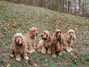 Kokří sraz - Aki, Bart, Berris, Ambra, Kira (zleva) :-)