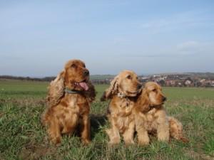 Ambra, Kira, Berris (zleva)