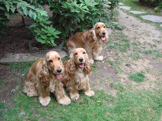 Omar, Ceďa, Clery (zleva)