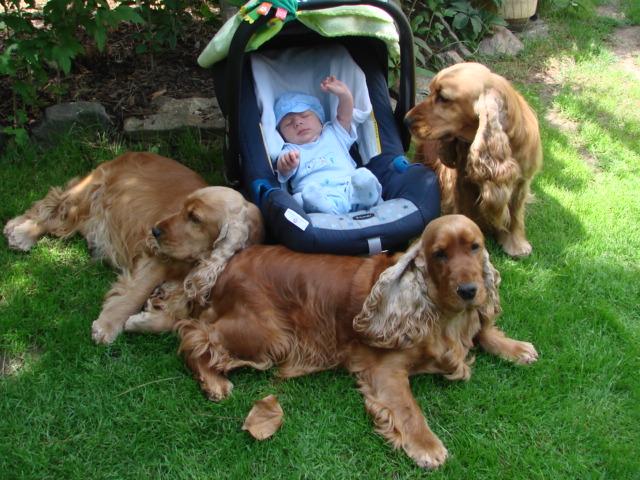 Náš Adam v obležení psích tetiček ;-)